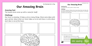 our amazing brain activity sheet amazing fact august human