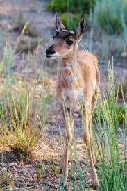 Utah wild animals images 92 best animals of southern utah images southern jpg