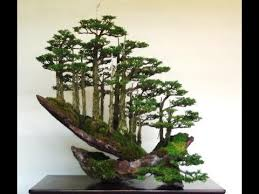 bonsai tree most expensive