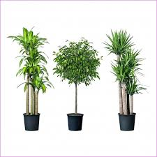 Best Plant For Office Desk Popular Fresh Desk Plants Plants For Office Desk Netztor Hhr