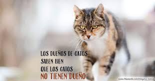 imagenes de gatitos sin frases las mejores imágenes de gatos graciosos y tiernos