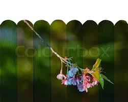 mural on wood thai mural the wood fence painting concept stock photo