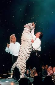 White Tiger Halloween Makeup by Tiger That Mauled Roy Horn Of U0027siegfried And Roy U0027 On Stage Dies