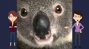 interesting video book for kids about koalas youtube