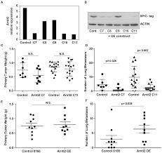 plos genetics the circadian rhythm gene arntl2 is a metastasis