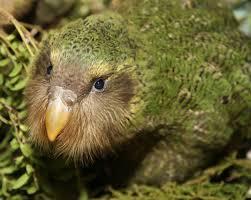 Doubling Devil Ark Global Wildlife Conservation