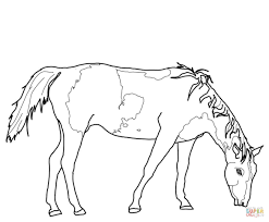 american paint horse coloring page free printable coloring pages