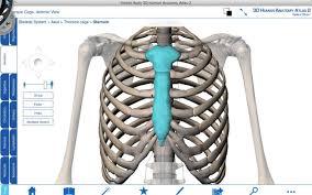 Human Anatomy Atlas Human Thorax Anatomy Human Anatomy Labelled
