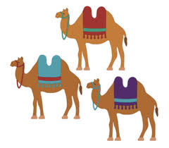 camels camels pinterest camels