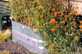 galvanized water trough planters u2022 insteading