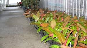 clean your indoor air this winter with plants logee u0027s plants for