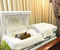 dog caskets loved dog gets human like funeral