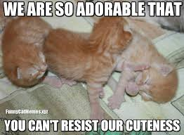Cute Kitty Memes - when you can t resist cuteness funny kitten meme