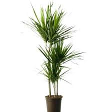 common household plants house plant identification guide by