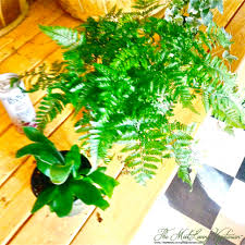 reduce pollution with indoor plants new shipment just in below