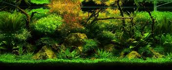 Aquascape Malaysia Aquatic Eden Aquascaping Aquarium Blog