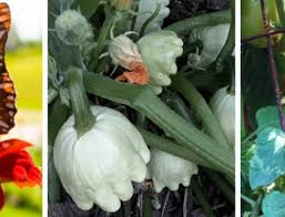 Summer Gardening - four tips for wrapping up the summer gardening season
