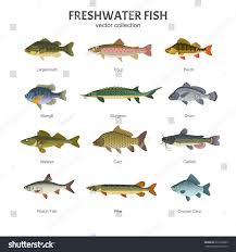 Freshwater Fish Freshwater Fish Set Vector Illustration Different Stock Vector