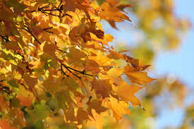 free images branch sunlight orange golden color yellow