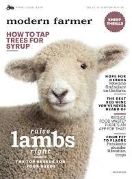 Alpaca Sheep Meme - 6 differences between llamas and alpacas modern farmer