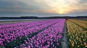 Where Is Holland On The Map Flowers Holland Com