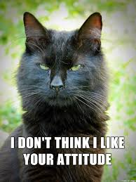 Mean Cat Memes - lolcats attitude lol at funny cat memes funny cat pictures