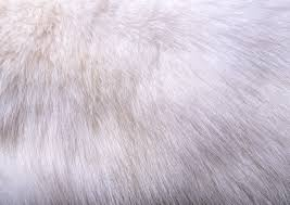 fur texture background image