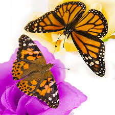 live butterfly release memorial packages a butterfly release