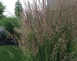 ornamental grasses update your curb appeal with just one plant