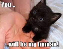 Cute Kitten Memes - cute black kitten memes girlsaskguys