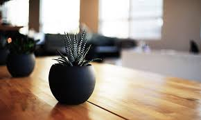Best Plant For Office Desk Desk Plants Will Bring To Your Office Cool Material