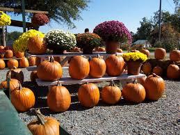 fall halloween pics free images harvest produce autumn pumpkin halloween