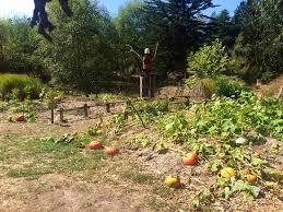 Fort Bragg Botanical Garden Pumpkin Patch Picture Of Mendocino Coast Botanical Gardens Fort