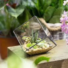terrarium table garden supplies