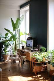 plantes bureau coin bureau type jungle magnifique espace avec meubles en
