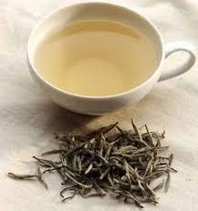 Teh Putih artikel kesehatan white tea teh putih yang menyehatkan