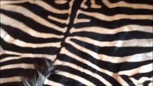 Cheap Animal Skin Rugs Cheap Zebra Skin Rug Supplier Youtube