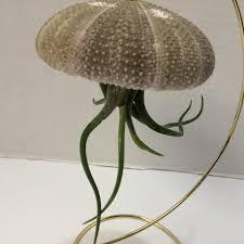 Medusa Planter Succulent Plant Large Sea Urchin With Medium Medusa U0027s Head Air