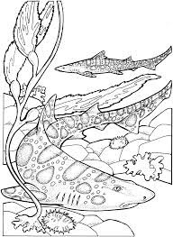 coloring pages shark coloring pages free and printable