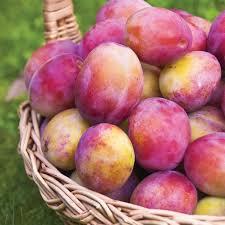 21 best plum tree s images on plum