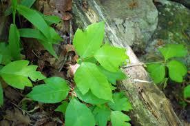 plants native to arkansas cedar falls u2013 trail to popular arkansas falls at petit jean state park