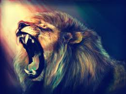 lion hd wallpapers lion hd pictures free download u2013 hd