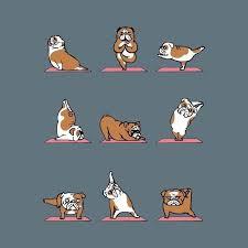 australian shepherd yoga video the 25 best images about bulldog on pinterest behance funny