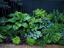 332 best shade garden plants images on pinterest gardens plants