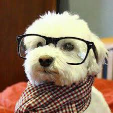 Dog With Glasses Meme - dropmeme not your mother s meme generator