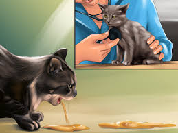 how to identify and treat liver shunts in cats 10 steps