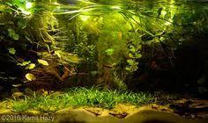 Aga Aquascaping Contest 720l Heckel Symphysodon Discus Biotope Naturalistic Life Under