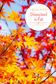 8 reasons you should visit disneyland in fall