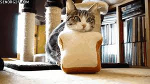 Cat Toast Meme - memebase toast page 3 all your memes are belong to us funny