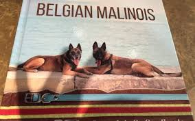 belgian malinois near me belgian malinois archives malinois usa
